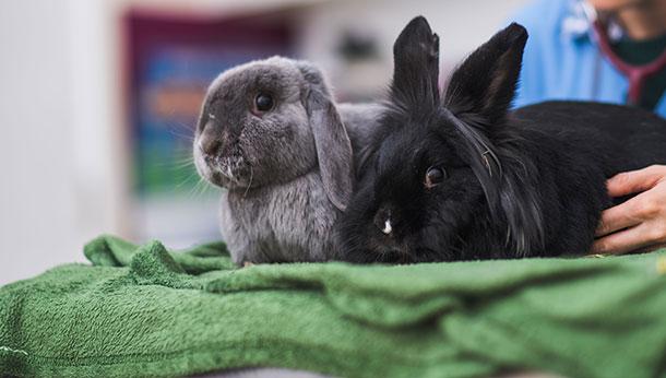rabbit gallery image