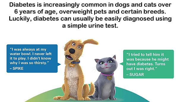 Pet Diabetes Month Offer