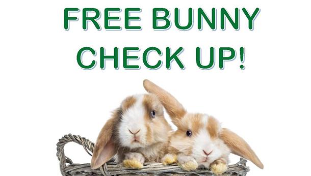 Free Bunny Check Up