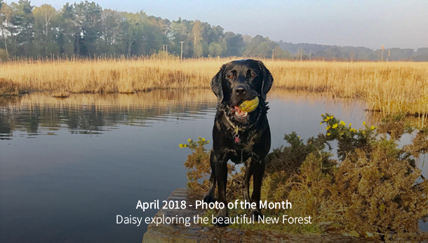 April 2018 Photo of the Month