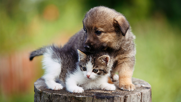 puppy and kitten on tree stump