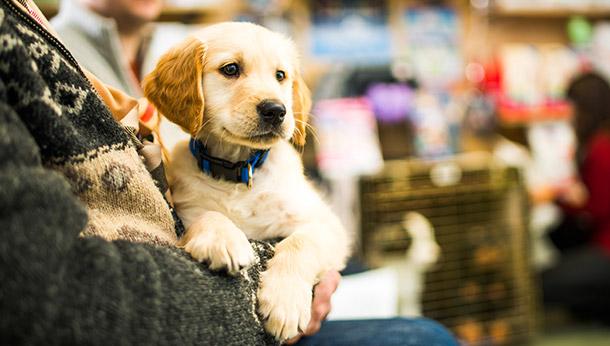 Puppy Starter Scheme
