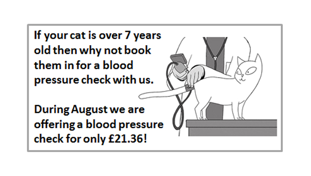 Cat Blood Pressure Offer