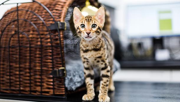 Kitten Pack Offer