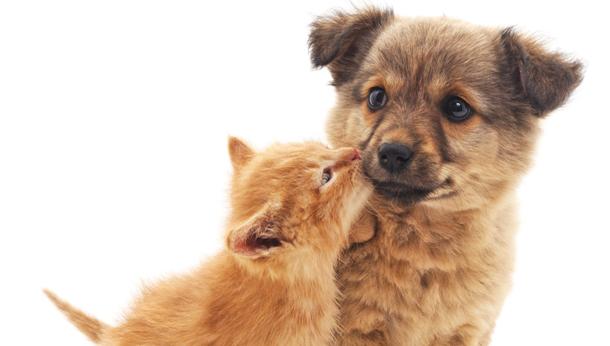 puppy and kitten starter packs