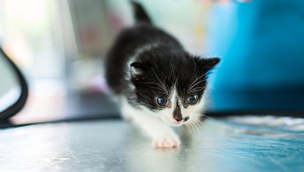 Kitten Best Start Pack