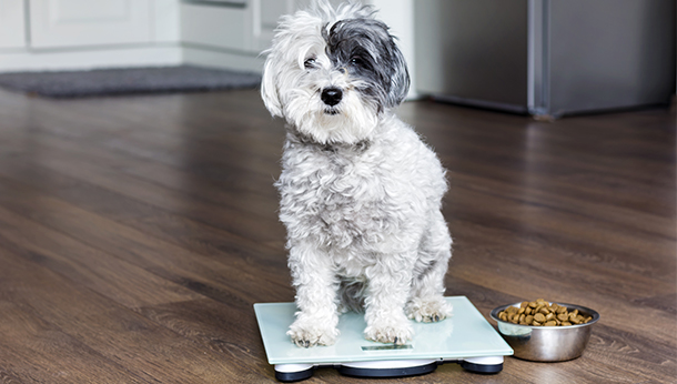 dog on the scale