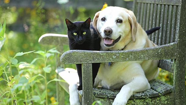 Puppy & Kitten Starter Packs
