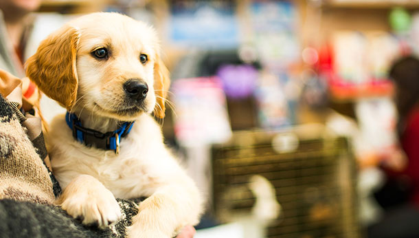 puppy in vet practice