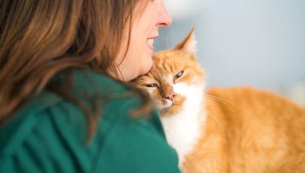 Ginger Cat Cuddle